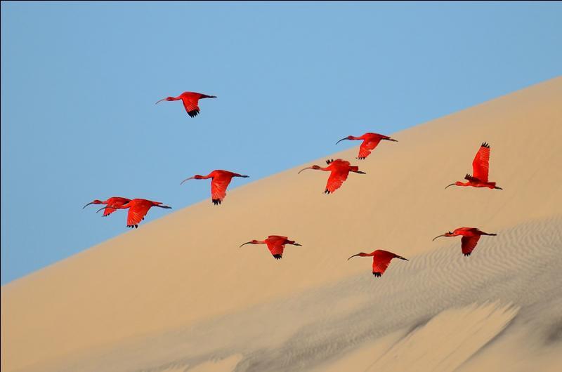 Du temps des pyramides, cet oiseau était célébré comme un dieu !
