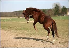 Après le travail, un cheval qui est lâché au pré fait des départs au grand galop avec les oreilles droites et rue, signifie :
