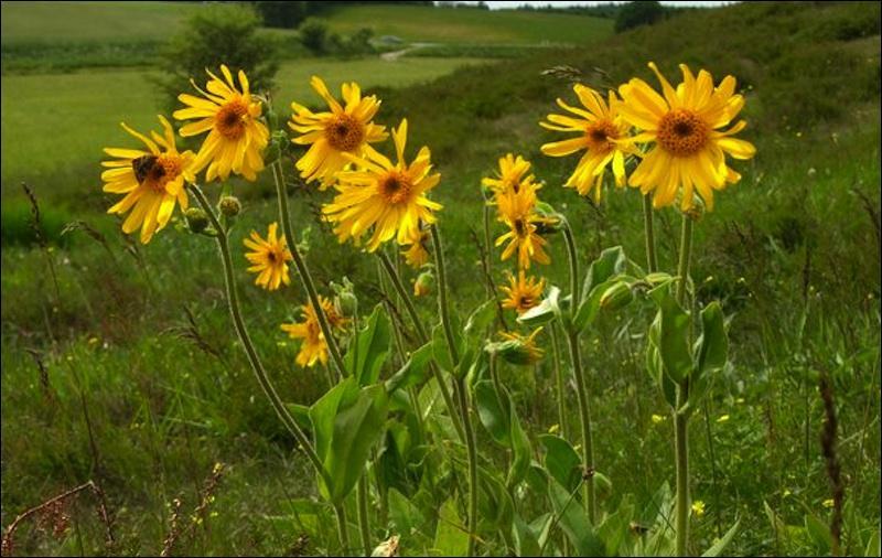 Fleurs jaunes auxquels les bleus ne résistent pas !