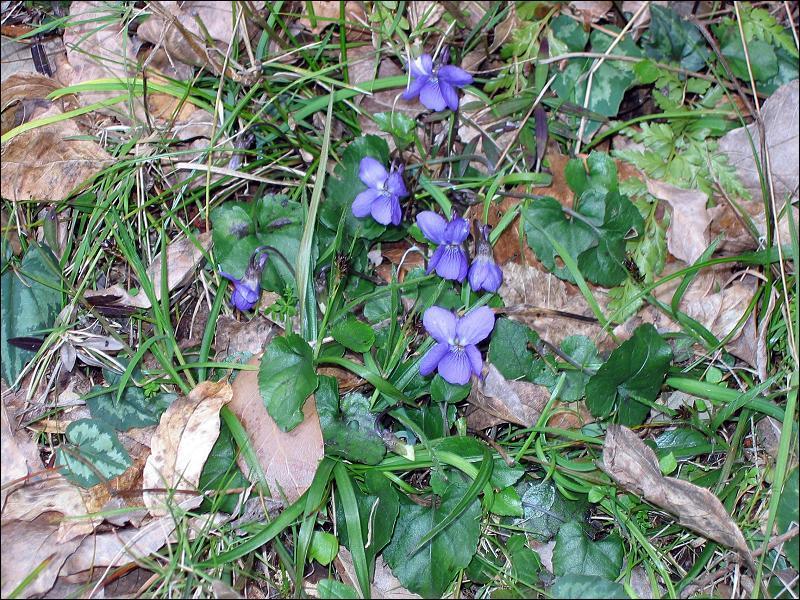 Vous connaissez certainement ces jolies fleurs qui poussent au printemps :
