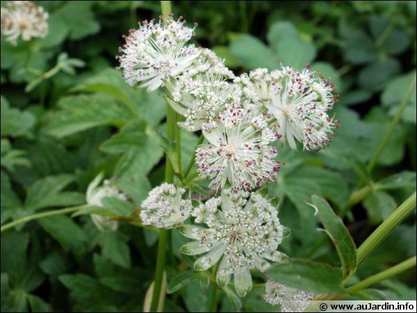 Quelle est cette superbe plante fleurie ?