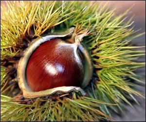 Ne pas confondre ce fruit avec le marron d'Inde qui est toxique ! Dans son nom, est écrit celui d'un animal. À quelle famille appartient-il ? (Ne pas tenir compte de l'accent.)