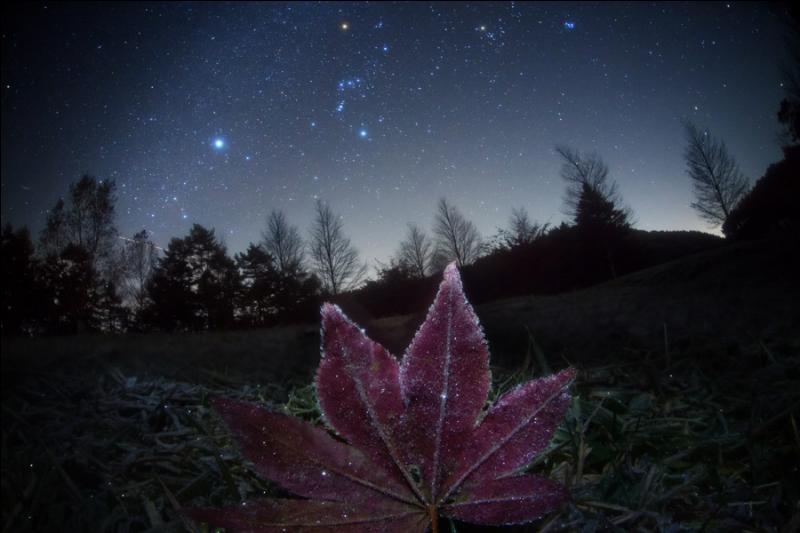 Quelle est l'étoile la plus brillante du ciel (après le Soleil) appartenant à la constellation du Grand Chien ?