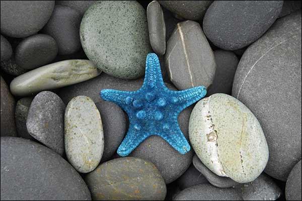 Que possède l'étoile de mer au bout des bras ?
