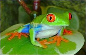 De quelle famille d'animaux les grenouilles et les crapauds font-ils parties ?