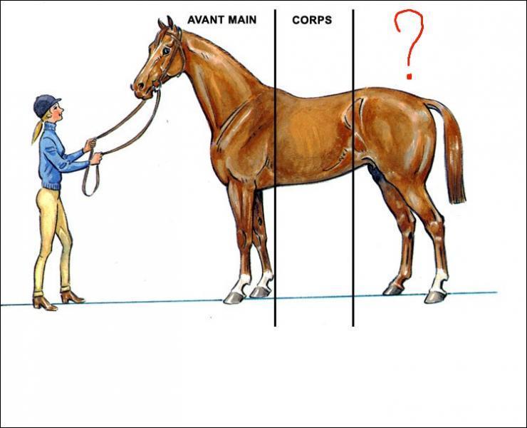 Comment s'appelle la partie arrière du cheval ?