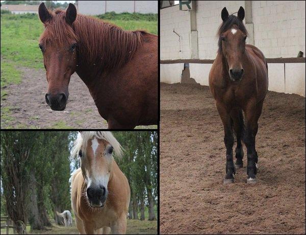 Quels sont ces trois chevaux?