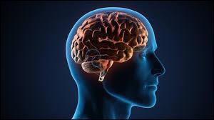 Combien de pourcents utilise-t-on de notre cerveau ?