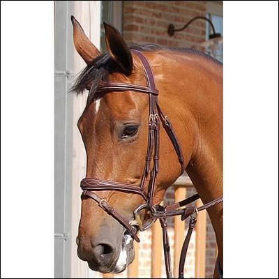 Ce cheval a un filet avec une muserolle......