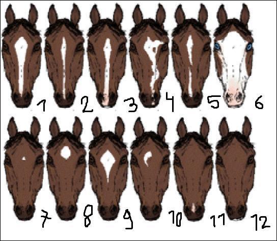 Quel est le nom des marques blanches des n°1, 6, 7, 8 et 9 dans l'ordre donné ?