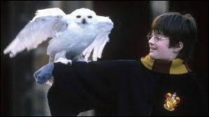 Qui a offert Hedwige à Harry le jour où il a fait ses courses sur le Chemin de Traverse ?