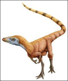 Dans quelle formation trouve-t-on beaucoup de dinosaures comme Sinosauropteryx (le premier trouvé dans cette formation) ?