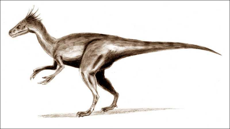 Ornitholestes est-il un dinosaure ?