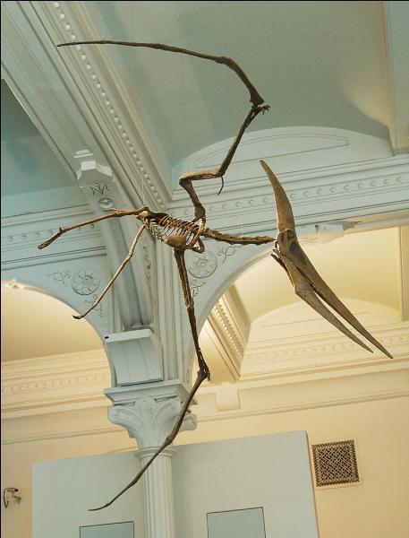 Et Pteranodon ?