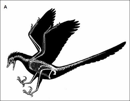 Quel dinosaure a été découvert à Madagascar ?