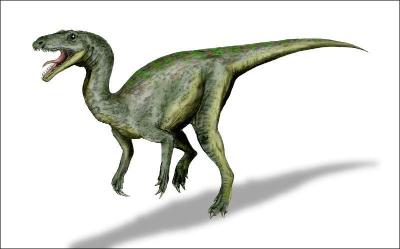 D'où tire son nom Gojirasaurus quayi ?