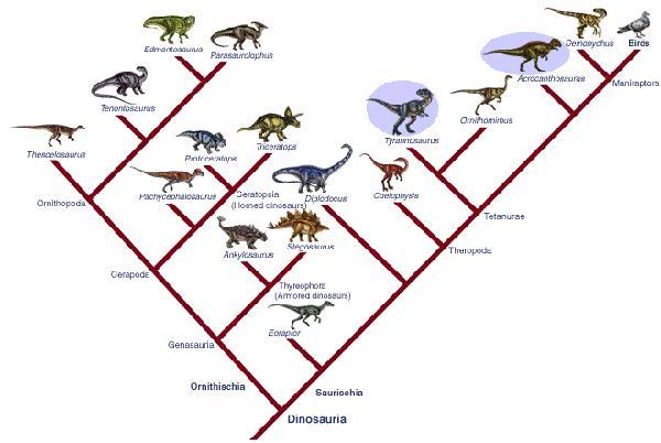Dinosaures et informations les concernant