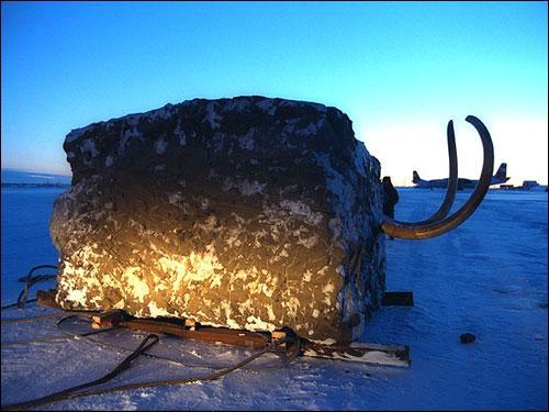 Les mammouths ont-ils été les seuls animaux de l'âge glaciaire qu'on ait retrouvés pris dans les glaces ?