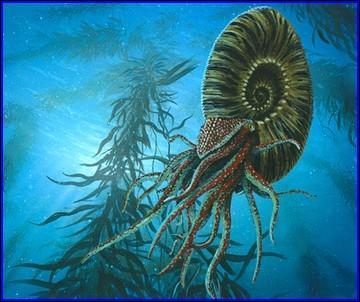 Les ammonites ont-ils tous disparu ?