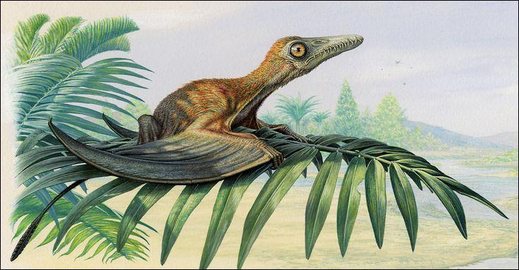Certains ptérosaures (reptiles volants) étaient-ils poilus ?