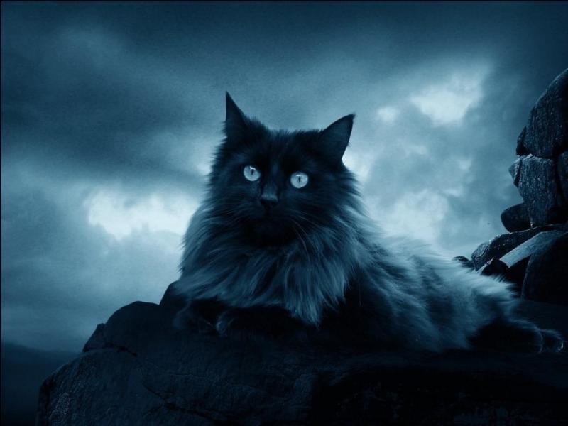 """Qui a écrit """"Les contes bleus du chat perché"""" ?"""