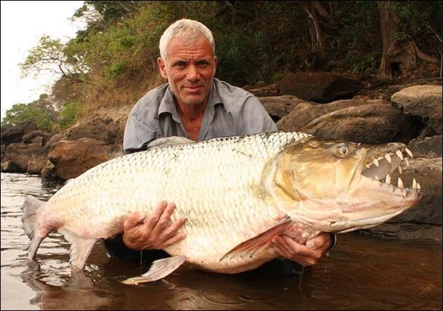 Où vit le poisson tigre goliath ?