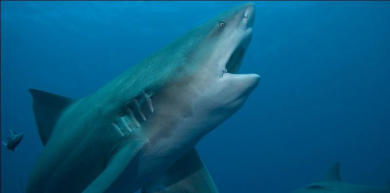 Peut-on trouver des requins en eau douce ?