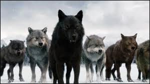 Lequel de ces acteurs ne joue pas le rôle d'un loup ?