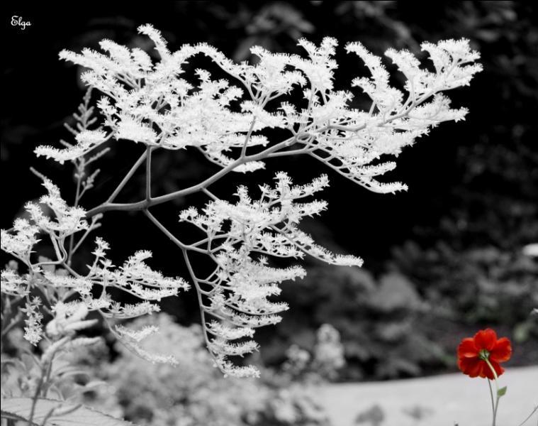 """Quel poète écrivait """"Dans la nuit de l'hiver galope un grand homme blanc..."""" ?"""