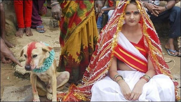 Le mariage d'un être humain avec un animal existe-t-il ?