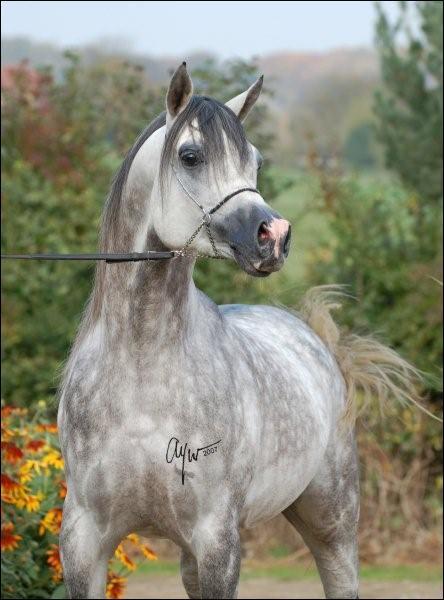 Quelle est la robe de ce cheval?
