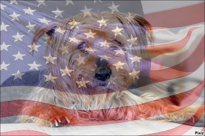 C'est le drapeau des Etats-Unis qui voile la photo de tes 17 ans ! Combien d'étoiles t'entourent ?