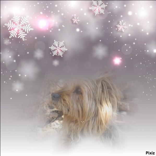 """Joli montage encore que cette photo de neige. Sais-tu qui chantait """"Tombe la neige"""" ?"""