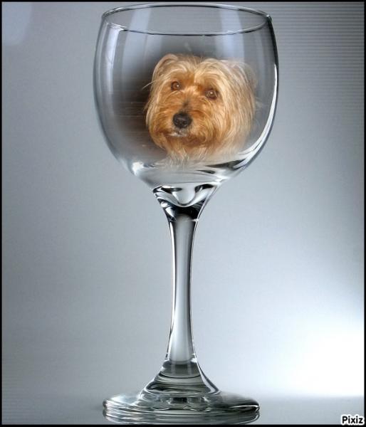 Voilà encore un joli montage ! Si tu avais été un vin blanc, selon les convenances, comment aurais-je dû remplir le verre ?
