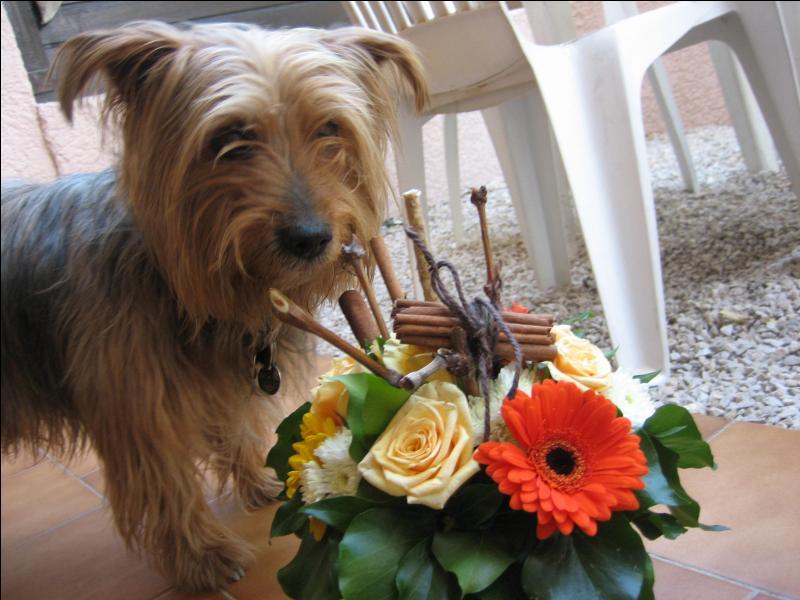 Tu as l'air intrigué par ce joli bouquet ! On y voit une rose et une fleur nommée...