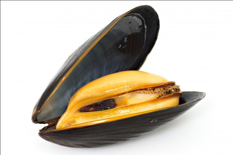 Tu connais ce mollusque bivalve. Quel est le genre de son nom ?