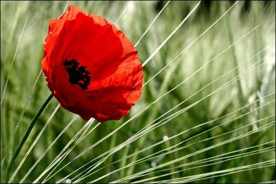 Dans le nom de cette fleur, tu entends celui d'un animal. Lequel ?