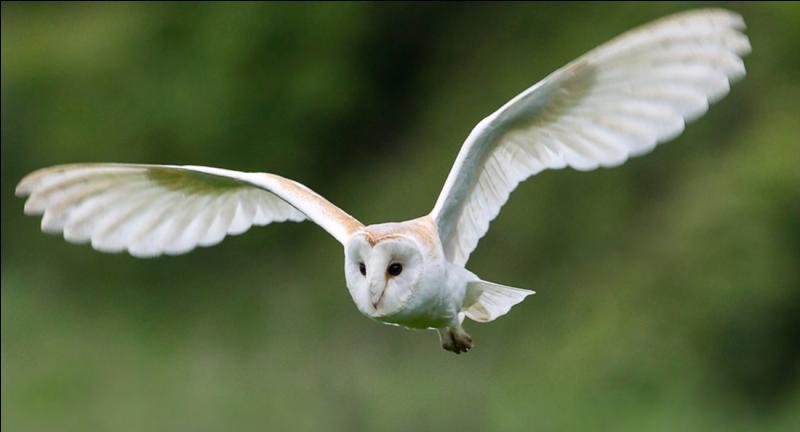 La première syllabe du nom de cet oiseau est...