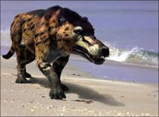 Pourriez-vous me citer le nom de ce prédateur qui vécut à l'époque de l'Éocène (56 à 33, 9 millions d'années) ? (Pouvant mesurer 5 m de long, 2 m au garrot, un crâne allongé d'environ 1 m, il pouvait peser jusqu'à 2 tonnes. Assez peu rapide à la chasse, cet animal était plus un carnassier).