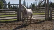 Comment s'appelle un des chevaux du prince qu'Amy va soigner ?