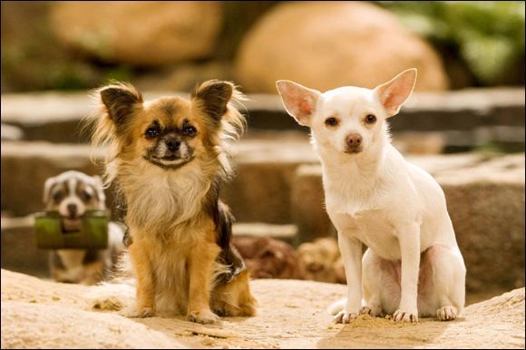 Quel est ce chien de Beverly Hills ?