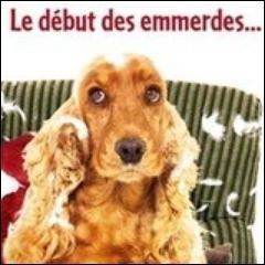 Quel est ce chien recueilli par Alain et Anna dans le film de Didier Bourdon ?