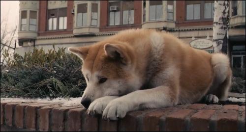 Quel est ce chien qui accompagne Paxter dans le film de Lasse Hallström ?