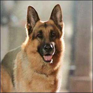 """Comment se nomme ce """"chien flic"""" ?"""