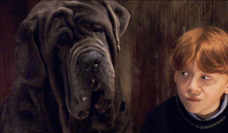"""Tout le monde connaît le chien de Hagrid dans """"Harry Potter"""", quel est son nom ?"""