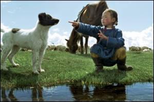 """De quelle couleur est le chien """"de Mongolie"""", dans le film de Byambasuren Davaa ?"""