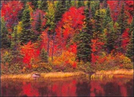 Comment appelle-t-on un automne où il fait beau, une saison qui n'existe que dans le Nord de l'Amérique ?