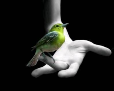 """Qui chantait """"Mais jamais rien ne l'empêche l'oiseau, d'aller plus haut"""" ?"""