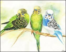 Pépiement des oiseaux :