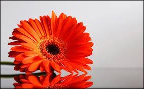 Quel est le nom de cette fleur orange ?